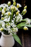 Fresh wild garlic flowers Royalty Free Stock Images