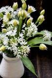 Fresh wild garlic flowers Royalty Free Stock Images