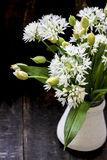 Fresh wild garlic flowers Stock Photography
