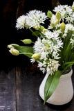 Fresh wild garlic flowers Stock Photography