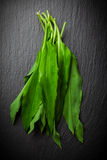 Fresh wild garlic leaves Royalty Free Stock Photo
