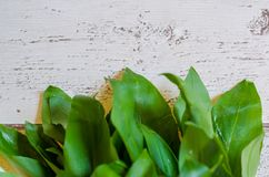 Fresh wild garlic leaves. Bunch of fresh wild garlic on white wooden background, also known as  ramsons or bear leak Stock Images