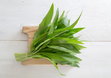 Fresh wild garlic on a wooden board Stock Images