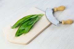Fresh wild garlic Royalty Free Stock Photo