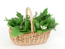Fresh wild herbs. In the basket stock images