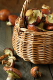 Fresh wild mushrooms in a basket Royalty Free Stock Images