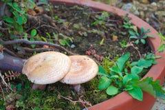 Fresh wild mushrooms Stock Photography