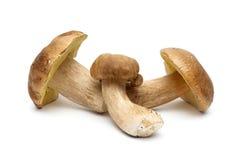 Fresh wild mushrooms isolated on white background Royalty Free Stock Images