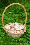 Fresh wild mushrooms Royalty Free Stock Photo
