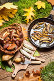 Fresh wild mushrooms from pan served in the forest Stock Photo