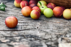 Fresh wild plum Stock Photos