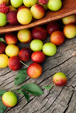 Fresh wild plum Royalty Free Stock Photography