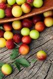 Fresh wild plum Royalty Free Stock Photography