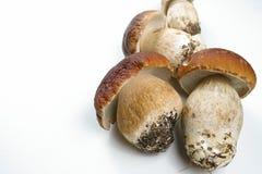 Fresh wild porcini mushrooms (boletus edulis) on white backgroun Royalty Free Stock Photo