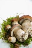 Fresh wild porcini mushrooms (boletus edulis) on white backgroun Stock Images