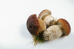 Fresh wild porcini mushrooms (boletus edulis) on white backgroun Stock Image