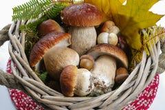 Fresh wild porcini mushrooms (boletus edulis) in wicked backet Royalty Free Stock Photo