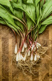 Fresh wild ramps (leeks) Stock Image