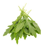 fresh wild rocket rucola leaves on white background Royalty Free Stock Photography