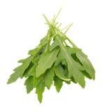 Fresh wild rocket rucola leaves on white background.  Royalty Free Stock Photography