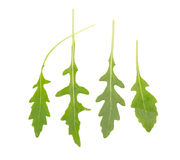 Fresh wild rocket rucola leaves on white background.  Stock Photography