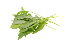fresh wild rocket rucola leaves on white background Stock Image