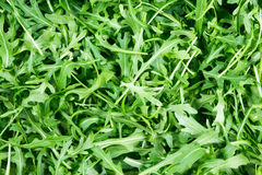 Fresh Wild Rocket salad background texture Stock Images