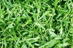 Fresh Wild Rocket salad background texture.  Stock Images
