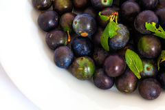 Fresh wild sloe berries Royalty Free Stock Photo