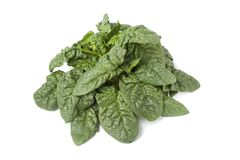 Fresh wild spinach leaves Royalty Free Stock Photography