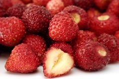 Fresh wild strawberries Royalty Free Stock Photos