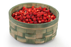 Fresh wild strawberries Royalty Free Stock Image
