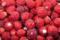Fresh wild strawberries Stock Photo