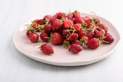 Fresh wild strawberries Stock Images