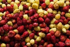 Fresh wild strawberry background Royalty Free Stock Images
