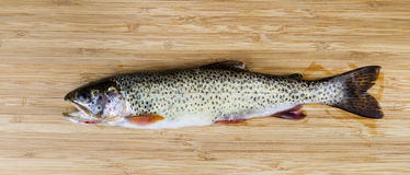 Fresh Wild Trout on Natural Bamboo Wood Royalty Free Stock Image