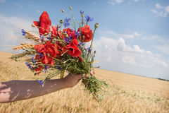 Fresh wildflowers bouquet. Royalty Free Stock Photos