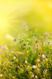 Fresh wildflowers stock images