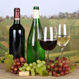 Fresh wine in the vineyards Stock Image