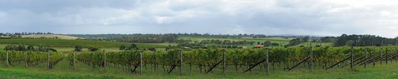 Fresh winery panorama Royalty Free Stock Images