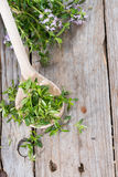 Fresh Winter Savory on a wooden spoon Stock Images