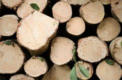 Fresh wooden natural sawn a logs closeup stock photography
