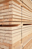 Fresh wooden studs Stock Image