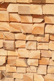 Fresh wooden studs Royalty Free Stock Photos