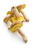 Fresh woodland fungi with boletus mushrooms. Royalty Free Stock Images