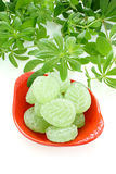 Fresh Woodruff and Candies Royalty Free Stock Images