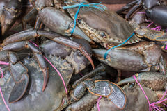 Fresh wrapped sea crab in fish market Royalty Free Stock Images