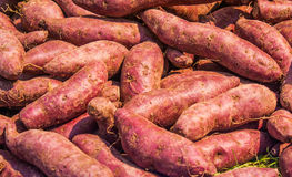 Fresh yam Stock Photography