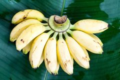 fresh yellow banana on green leaf Royalty Free Stock Images