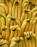 Fresh yellow bananas rows Stock Photo
